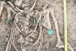 Archaeological excavations. Human remains (bones of skeleton, skulls) in the ground, with artefacts found in the tomb (bijou, pendants, supposedly of copper). Real digger process. Outdoors, copy space