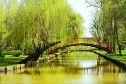 Arched red bridge in a park with willows and water
