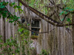Architecture background of a window in the wall of an old wooden house with branches of a Florida oak tree in the foreground adorned with vines and Spanish moss.