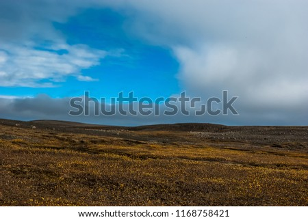 Arctic autumn  tundra  and black desert in the central wasteland in Iceland. Central highlands.  Road to Askja volcano. September.  #1168758421