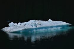Arctic birds and a seal on an ice floe in Alaska.