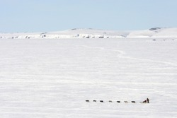 Arctic landscape with a dog sled. Dog team with a sled. A musher in traditional Chukchi fur clothes. Cold snowy May in the far north. Chukotka, Siberia, Far East Russia. Travel and extreme tourism.