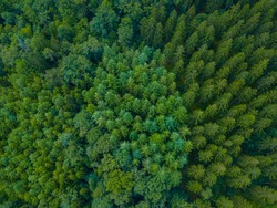 Ardennes, Belgium. Arial photo of a forest during the sunrise