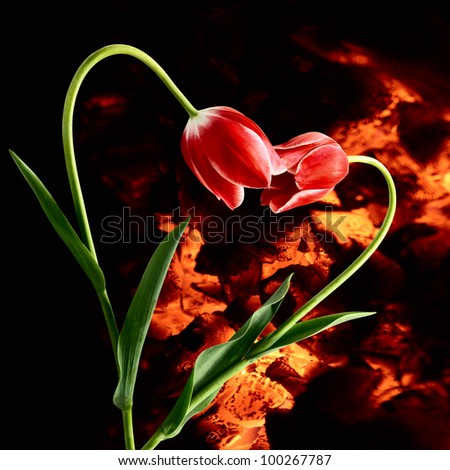 Ardent passion. Idea with flowers forming heart on darkness background with live coals