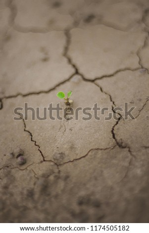 Area of drought But also a small seedling grows new. #1174505182