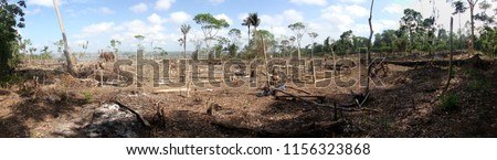 Area of illegal deforestation of vegetation native to the Brazilian Amazon forest #1156323868