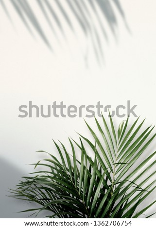 Areca palm shadows on a white wall #1362706754
