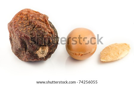 Argan fruits with nut, with shell and almond of argan. Isolated on white - stock photo