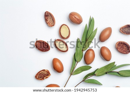 Argan seeds isolated on a white background. Argan oil nuts with plant. Cosmetics and natural oils background.