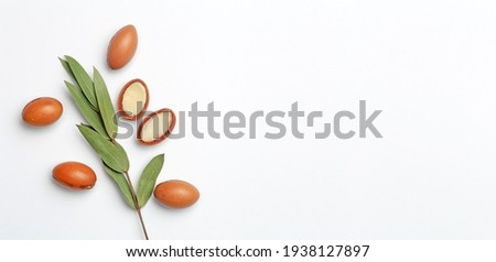 Argan seeds isolated on a white banner background. Argan oil nuts with plant. Cosmetics and natural oils background.