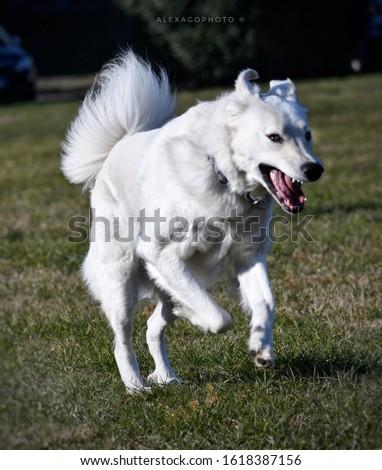 Argone il cane dello zio  Zdjęcia stock ©
