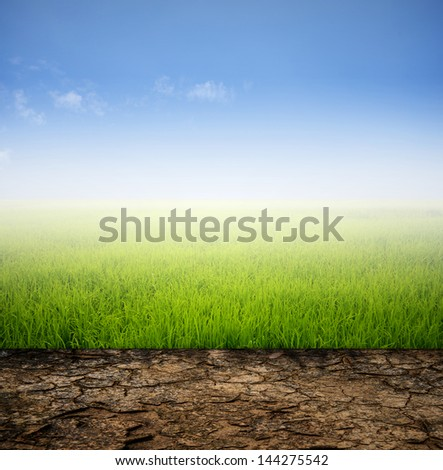 Arid and grass field with sky , Difference of nature
