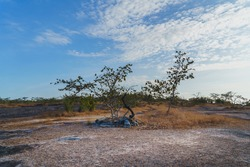 Arid areas and dry trees and blue sky