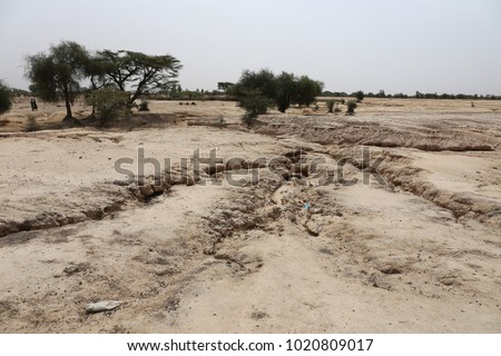 Arid landscape in north senegal. Eroded soil with few acacia trees. Traces of erosion on the sandy ground. Dry climate conducting to the desertification. Natural picture taken during the dry season.