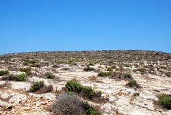 Arid landscape on a summer day. Lampedusa, Italy. Summer 2009.