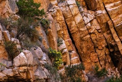 Arid plants growing from cracks in solid rock