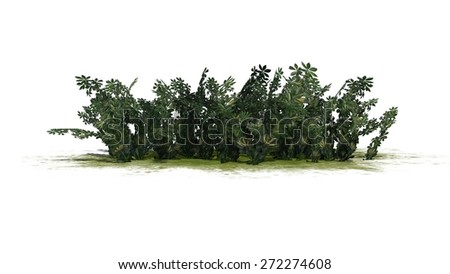 Arizona bush flowers - isolated on white background