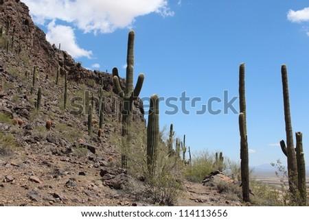 Arizona Desert Hillside