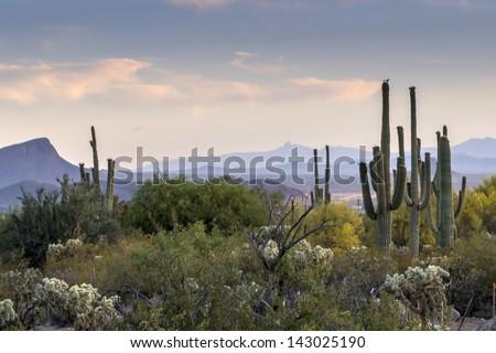Arizona Desert Sunset in Tucson, Arizona
