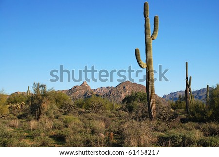 Arizona desert terrain showing various desert foliage and mountains. - stock photo