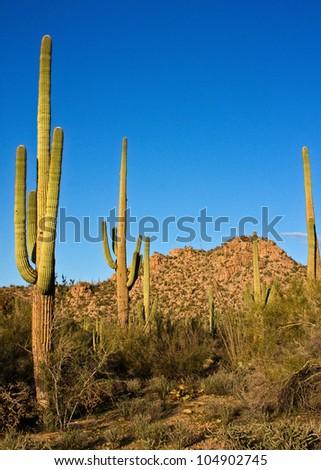 Arizona's Saguaro National Park - stock photo
