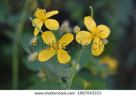 arka plan için mükemmel bir yaz çiçeği Stok fotoğraf ©