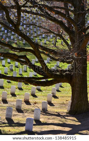 Arlington Cemetery with Grave Stones and Tree