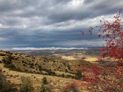Armenia, Red berry tree in Yeranos mountainchain