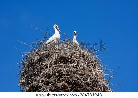 Armenian Crane Birds in their Nest