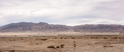 Army buildings are well camouflaged in the desert landscape.