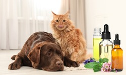 Aromatherapy for animals. Essential oils near dog and cat on background