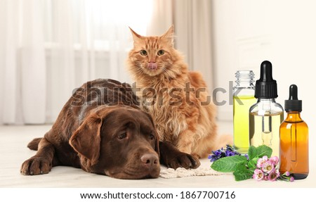Aromatherapy for animals. Essential oils near dog and cat on background Foto stock ©