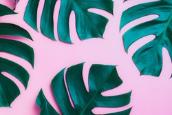 Aromatherapy  product  Spa set, flat lay composition.Tropical leaf concept style., massage with pink background. top view.Monstera leaves template, tropical summer fashion background.