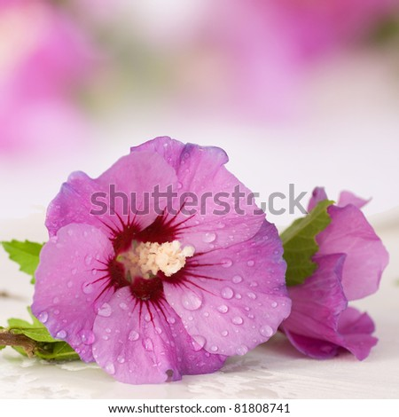 Aromatherapy with hibiscus flowers