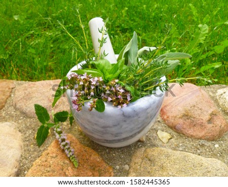 Aromatic culinary herbs. Bunch of fresh green organic herb leaves in marble mortar on old stone wall background. Thyme, Sage, Oregano, Basil and Mint closeup. Bundle of freshly picked kitchen herbs.