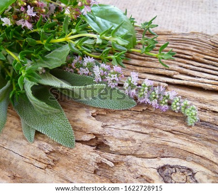 Aromatic culinary herbs. Bunch of fresh green organic herb leaves on old wooden background. Thyme, Sage, Oregano, Basil and Mint closeup. Bundle of freshly picked kitchen herbs.