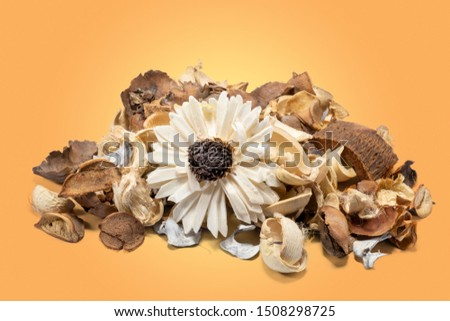 Aromatic dried flowers and aromatic dried bark on orange background.
