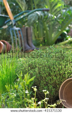 aromatic herbs in front of gardening tools  #415371130