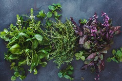 Aromatic herbs on dark background. Fresh green and red basil leaves and flowers , thyme  and mint leaves. Flat lay