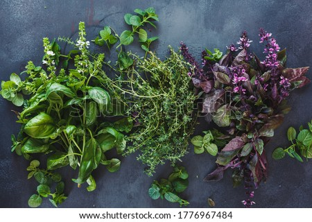 Aromatic herbs on dark background. Fresh green and red basil leaves and flowers , thyme  and mint leaves. Flat lay  Foto stock ©