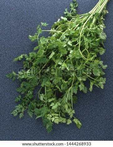 Aromatic leaves of garden Chervil