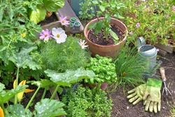 aromatic plants and vegetable plants growing in garden   with gardening tools on the soil