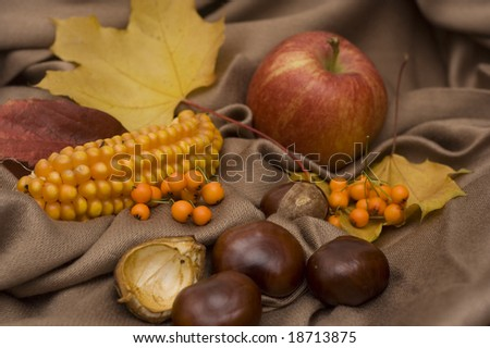 arrangement made of leaves, chestnuts and corncob and apple