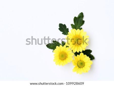 Arrangement of a small chrysanthemum