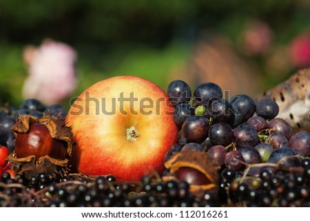 arrangement of autumnal fruits