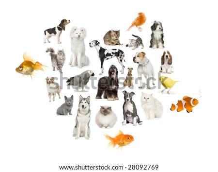 Arrangement of 22 domestic animals in front of a white background
