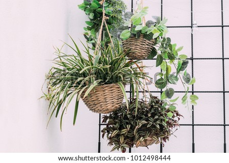 Arrangement of hanging wicker flowerpots with green house plants against decorative black grid.