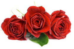 Arrangement of Three Beautiful Red Roses with Leaf and Water Droplets isolated on white background