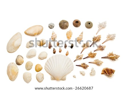 arrangement with shells isolated on white