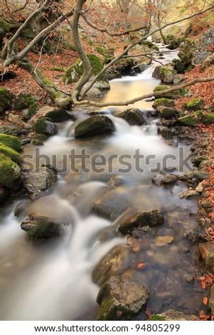 Arroyo del Villar. The Faedo forest. Ciñera of Gordon, Leon.
